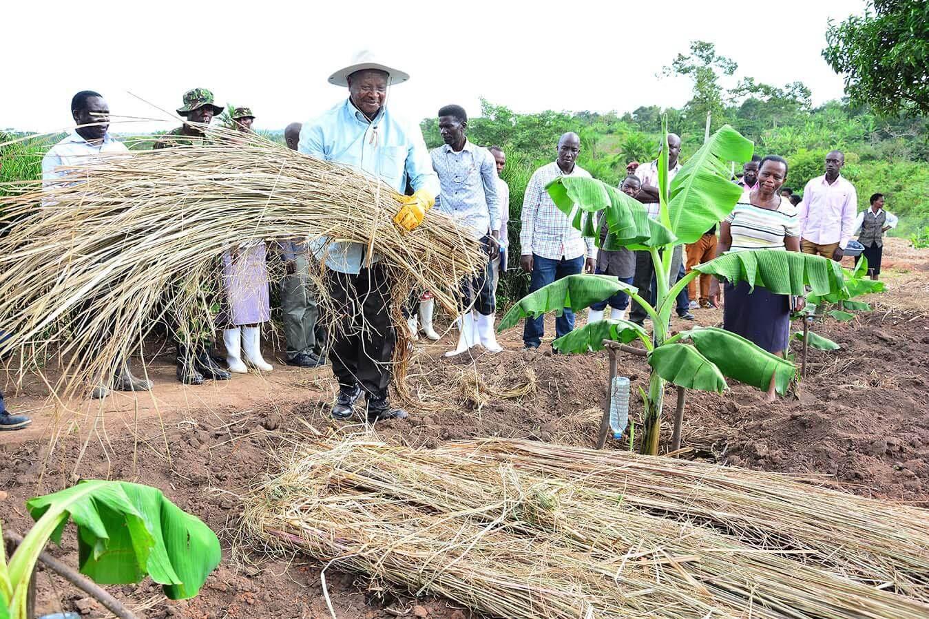 Kawumu Presidential Demostration farm - Luwero